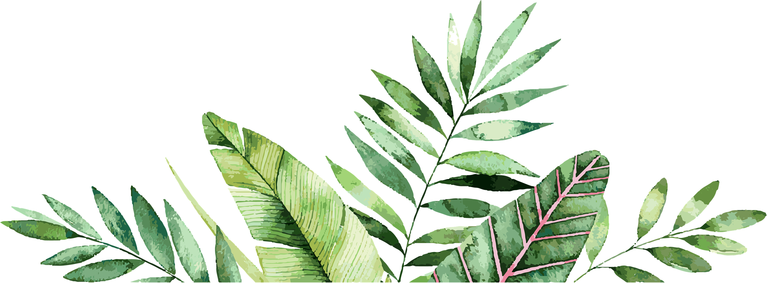 palm leaves graphic